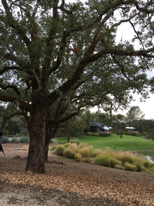 oliver ranch tree