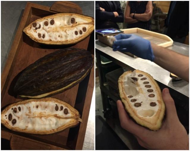 dandelion-chocolate-cacao-bean-lizelleg