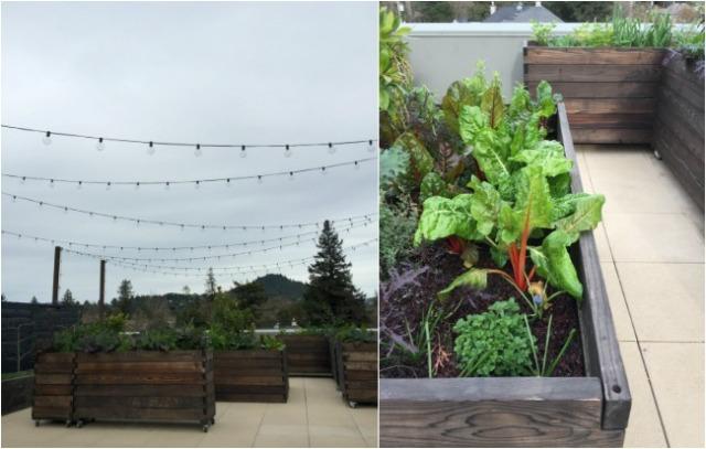 single-thread-farm-roof-garden
