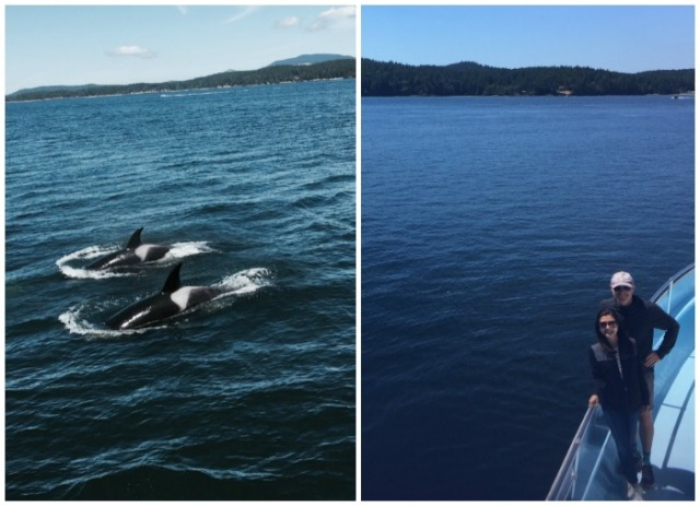 whale-watching-orcas-lizellegreen